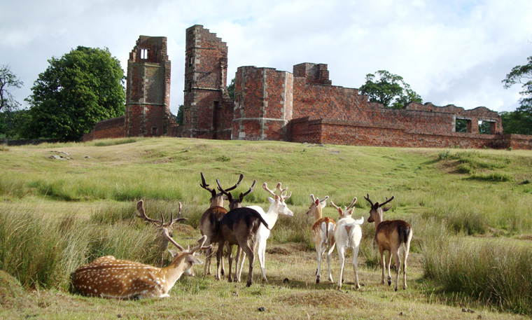 rt-deer-herd-and-bradgate-ruins